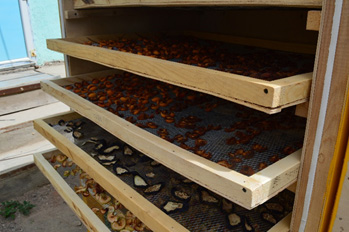20 фермердик топ күн кубаты менен иштеген как кургатуучу жабдуу алды